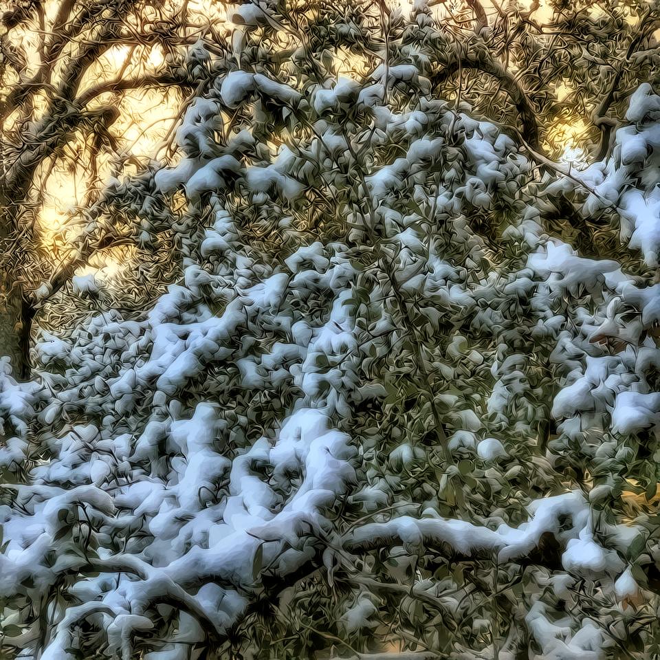 Snow?-snow.png