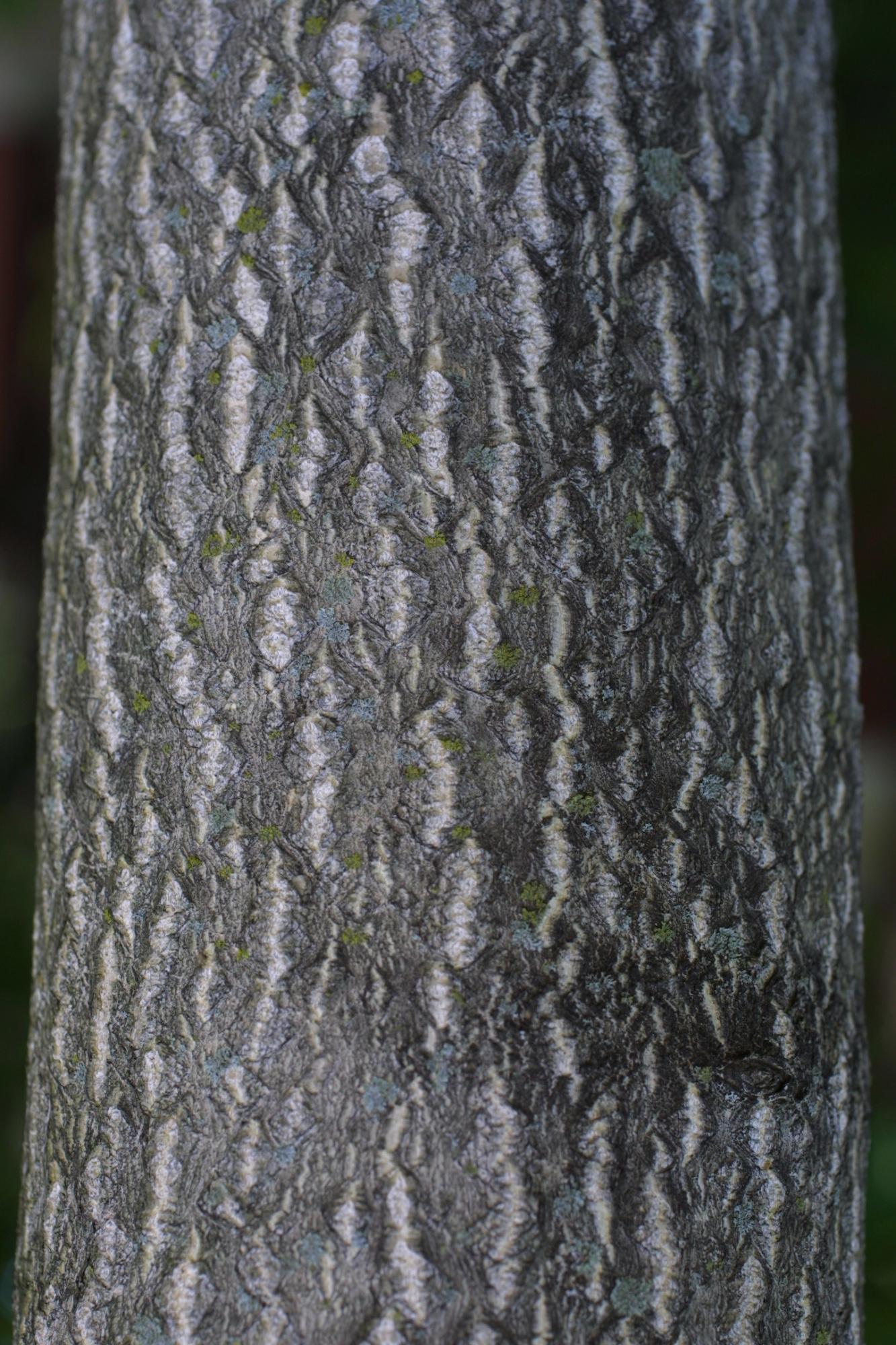 Please help!! What is this wood species??-sumac-bark.jpg